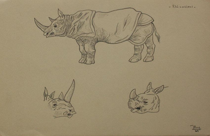 "Vintage Drawing - ""Rhinoceros Study"" 1941 #25"