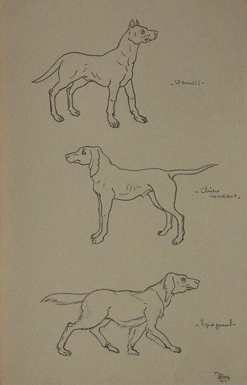 "Vintage Drawing - ""Dog Studies"" 1941 #15"