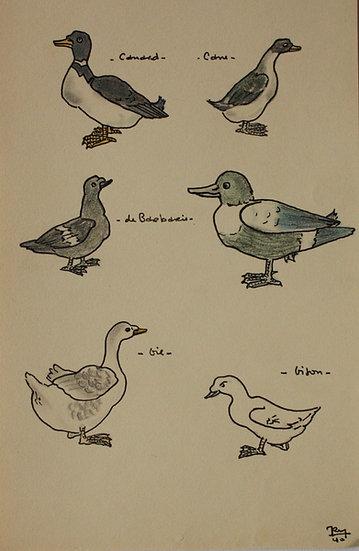 """""""Études d'Oiseaux"""" - 1940 - Dessin Original #29"""
