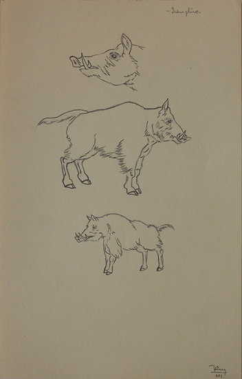 "Vintage Drawing - ""Boar Studies"" 1941 #1"
