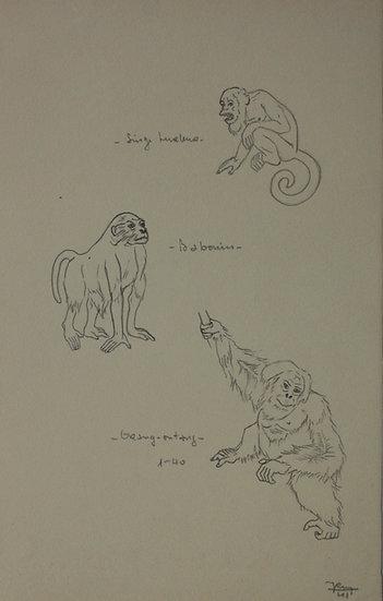 """Dessin Vintage - """"Étude de Singe, Babouin et Orang-outan"""" 1941 #6"""