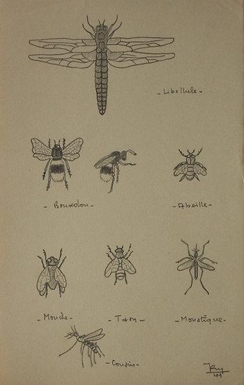 """""""Études d'Insectes"""" - 1941 - Dessin Original #21"""