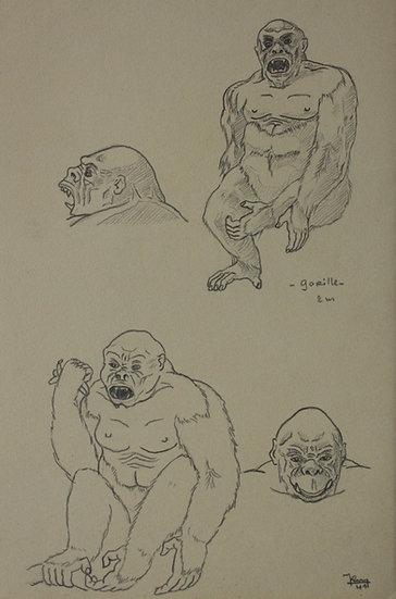 """Dessin Vintage - """"Étude de Gorille"""" 1941 #8"""