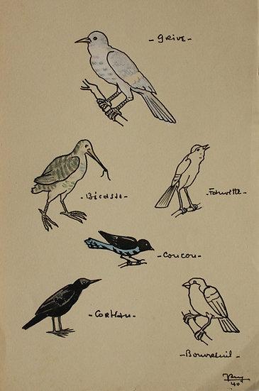 """""""Études d'Oiseaux"""" - 1940 - Dessin Original #30"""