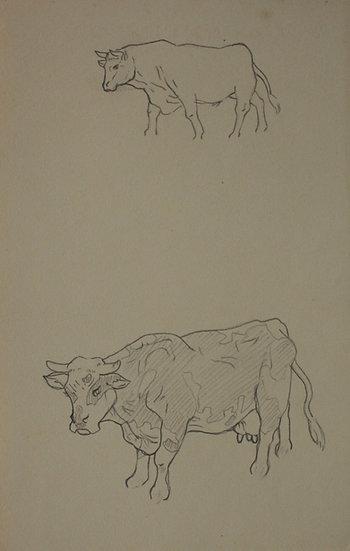 """Dessin Vintage - """"Étude de Vache"""" c.1940 #12"""