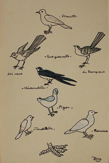 """""""Études d'Oiseaux"""" - 1940 - Dessin Original #28"""