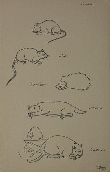 """Dessin Vintage - """"Études de Souris, Rat, Hérisson, Taupe, Castor"""" - 1941 #17"""