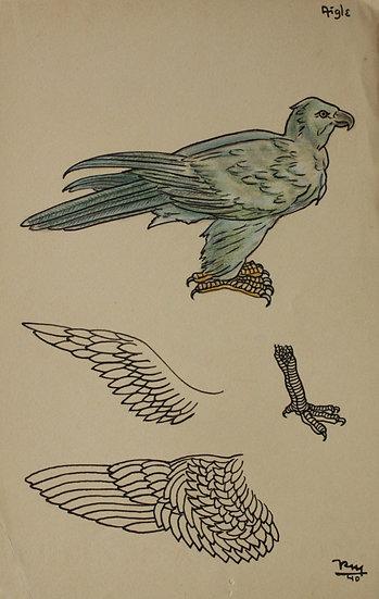 "Vintage Drawing - ""Eagle Study"" Bird - 1940 #26"