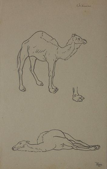 """Dessin Vintage - """"Étude de Chameaux"""" 1941 #3"""