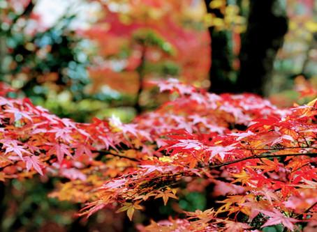 お寺の紅葉