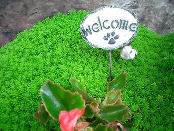 SALON DU SHIN観葉植物
