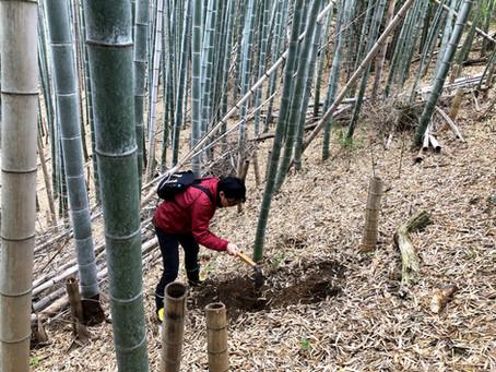 平成最後のタケノコ掘り