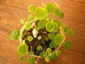 SALON DU SHIN 観葉植物