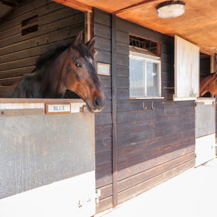 Stables at Coldcroft Livery May Hill