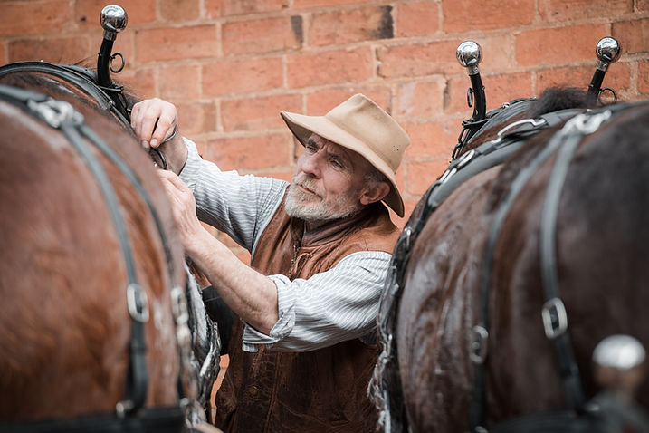 heavy horse experience days in Gloucestershire