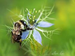 BEE BOMBER