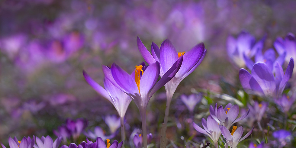 Spring Awakening Flower & Droplet Symposium