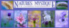 Spring Header WEB.png