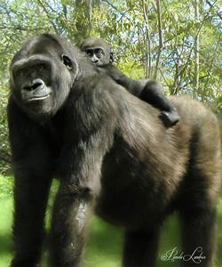 Gorillas-FB