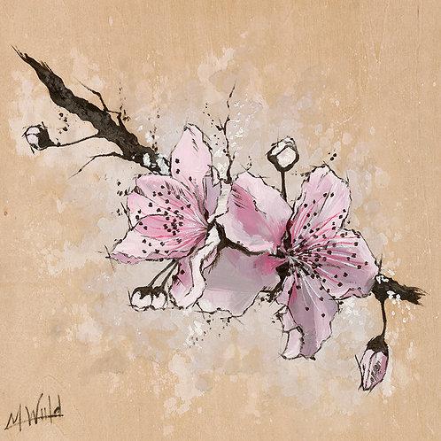 Cherry Blossom | Fine Art Print
