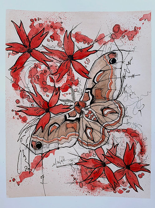 Cecropia Moth and Wildflower Study   Original Drawing