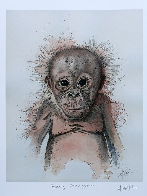Baby Orangutan  | Fine Art Print