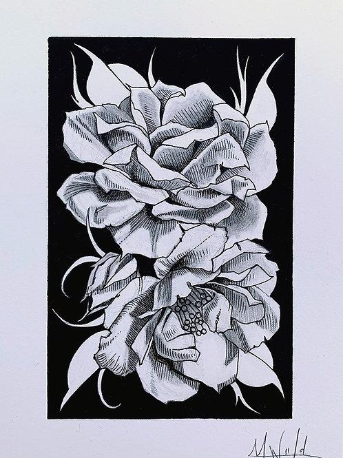 Columbus Park of Roses Study   Original Drawing