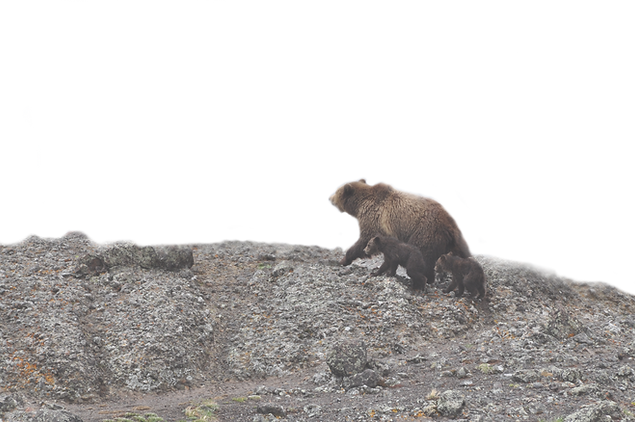 bear_edited.png