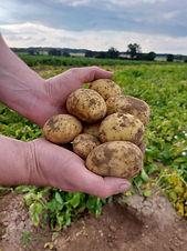 Schuettenbuers_Kartoffeln.JPG