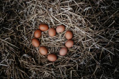 Große Eierliebe