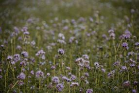 Noch mehr Blüten