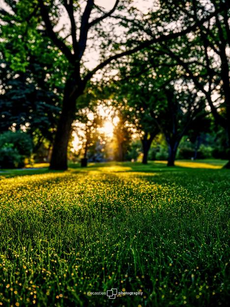 borden park sunrise 2.jpg