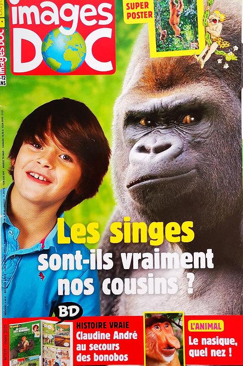 Images Doc, Les singes sont-ils vraiment nos cousins ?