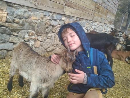 Visite à la chèvrerie!