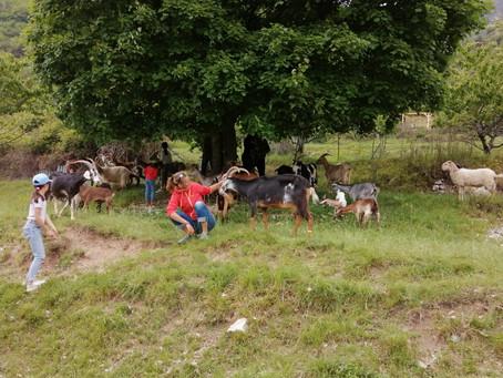 Rencontre avec les bergers