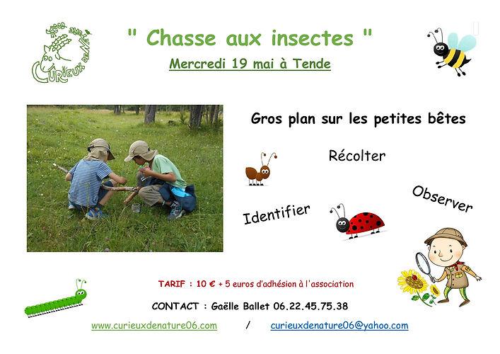 CDN-Insectes_1.jpg