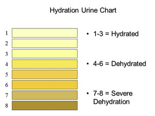 Importance of Hydration for Athletes
