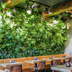 Top 10 plants for an indoor Living green wall/ vertical garden!