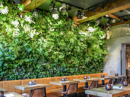 Top 10 plants for an indoor Living green wall/ vertical garden!