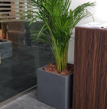 Indoor Plants at Aurum Leasing Limited -
