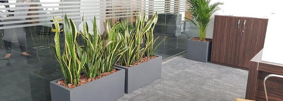 Indoor Plants at Aurum Leasing Limited -