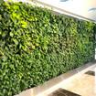 Top 11 Benefits of Living Green Walls/Vertical Gardens