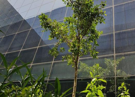 Stantec International HO - SZR Dubai