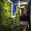 Benefits of a Living wall-Green wall