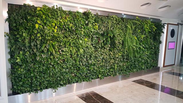 Living Green Wall (indoor) Zulekha Hospi