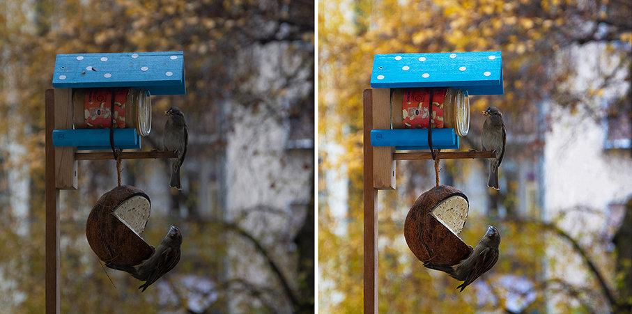 COMBO Vogelfutter klein.jpg