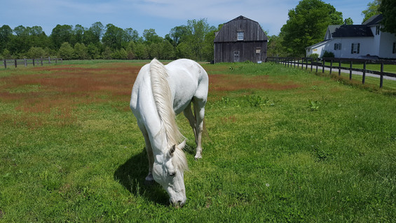 Gentle rescue horses for visiting or guided, on the ground play