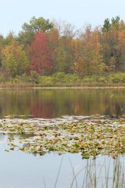 Lake Sherwood_Autumn red