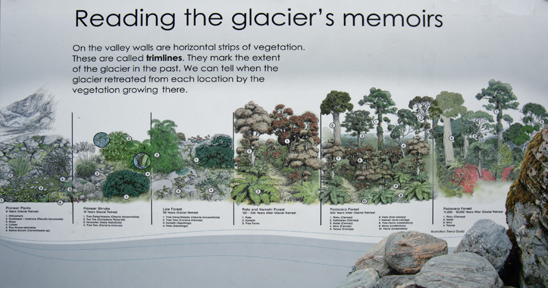 Fox Glacier time line