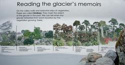 Fox Glacier time line
